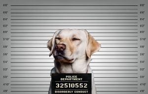 Guilty dog mugshot